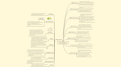 Mind Map: Aerobic Respiration