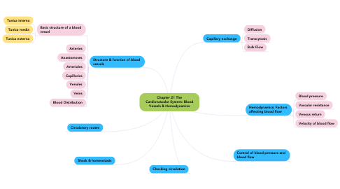 Mind Map: Chapter 21 The Cardiovascular System: Blood Vessels & Hemodynamics
