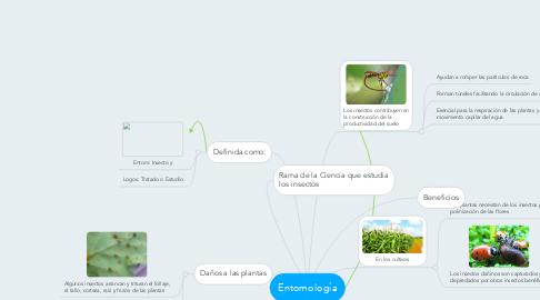 Mind Map: Entomología