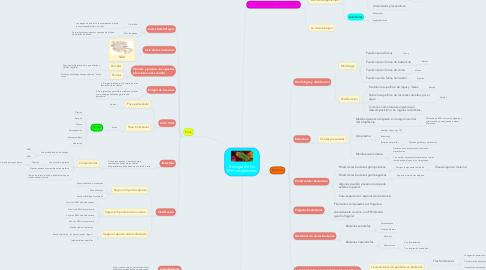 Mind Map: Biología de los Microorganismos