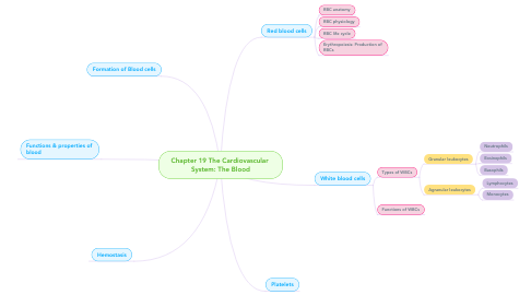 Mind Map: Chapter 19 The Cardiovascular  System: The Blood