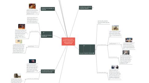 Mind Map: A DÚVIDA COMO OPORTUNIDADE DE AMPLIAÇÃO DE HORIZONTES