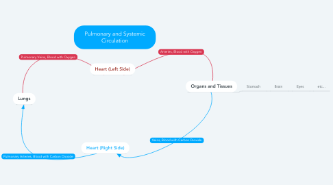 Mind Map: Pulmonary and Systemic Circulation