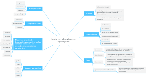 Mind Map: la relacion del cerebro con la percepcion