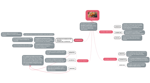 Mind Map: los peces