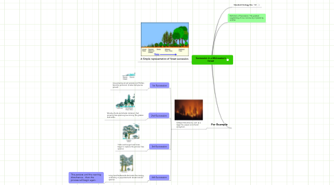 Mind Map: Succession in a Mid-western forest