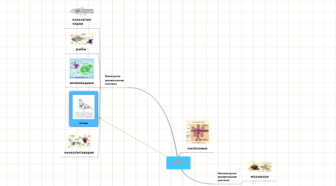Mind Map: эволюциякровеноснойсистемы