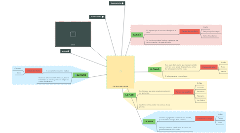 Mind Map: PARTES DE LAS PLANTAS