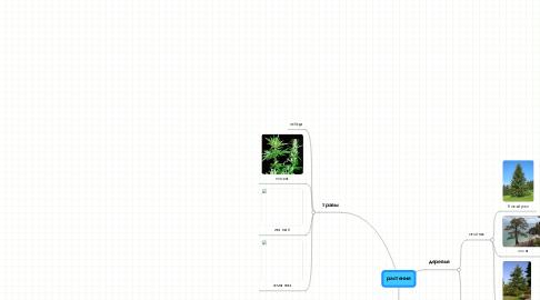 Mind Map: растения