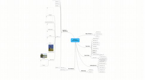 Mind Map: Adrianna's Vocab Mind Map