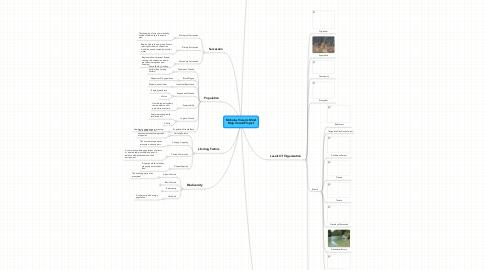 Mind Map: Nicholas Vivian's Mind Map Vocab Project