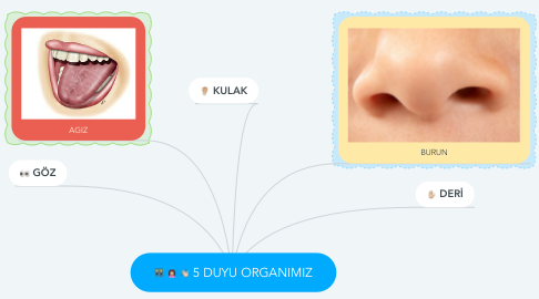 Mind Map: 5 DUYU ORGANIMIZ