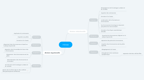 Mind Map: méiose