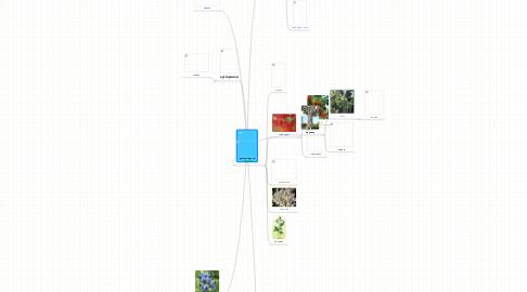 Mind Map: растения леса