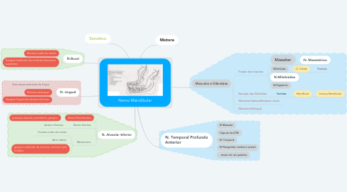 Mind Map: Nervo Mandibular