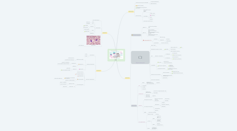 Mind Map: SEPSIS
