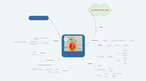 Mind Map: ANATOMIA DEL APARATO RESPIRATORIO
