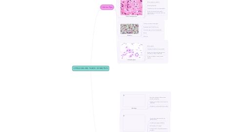 Mind Map: CITOLOGÍA DEL TEJIDO CONECTIVO