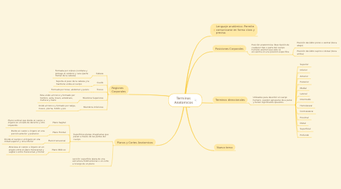 Mind Map: Terminos Anatomicos