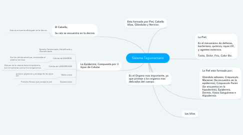 Mind Map: Sistema Tegumentario