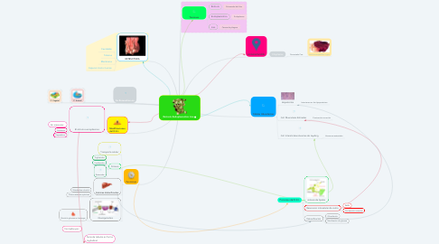 Mind Map: Retículo Endoplasmático Liso