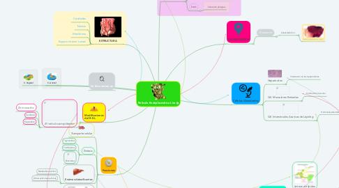 Mind Map: Retículo Endoplasmático Liso