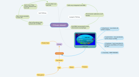 Mind Map: 5 Viruses released!
