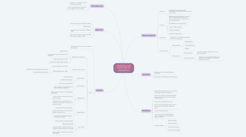 Mind Map: INTRACELLULAR STRUCTURE OF PROKARYOTE