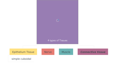 Mind Map: 4 types of Tissues