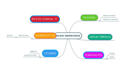 Mind Map: AGAVE MARMORATA
