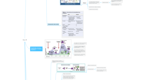 Mind Map: Clase 35