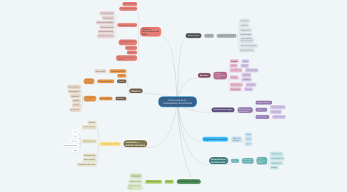 Mind Map: Estructura de la investigacion documental