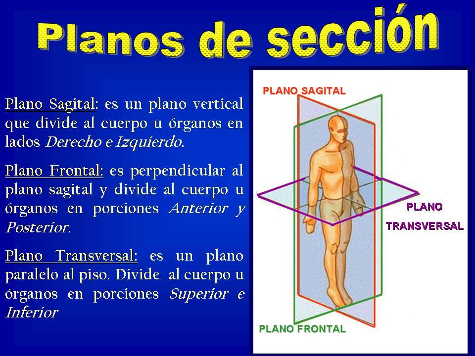EJES Y PLANOS DEL CUERPO HUMANO (Example) - MindMeister