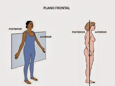 Anatomía del Cuerpo Humano (Пример) - MindMeister