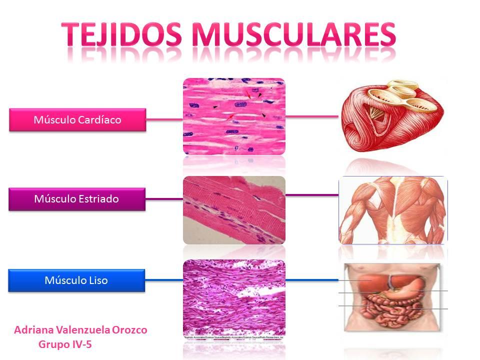 ASPECTOS ANATÓMICOS DEL CUERPO HUMANO (Example) - MindMeister