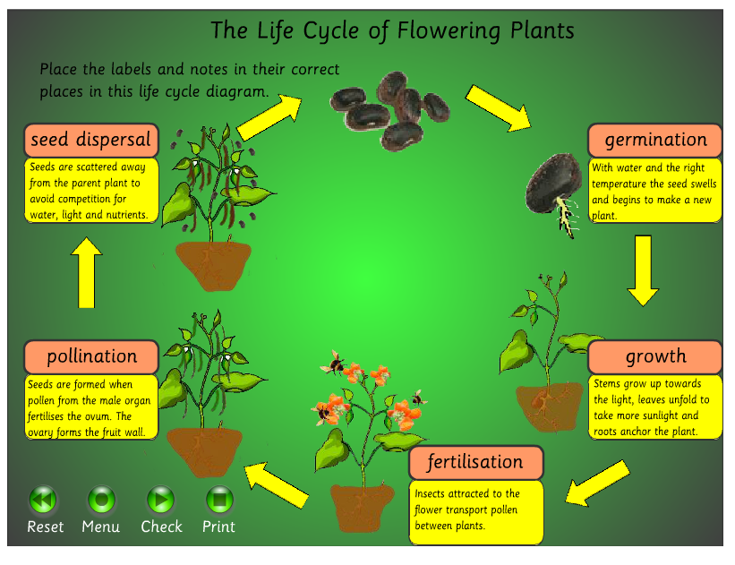 Science Exam Of Plants Example Mindmeister