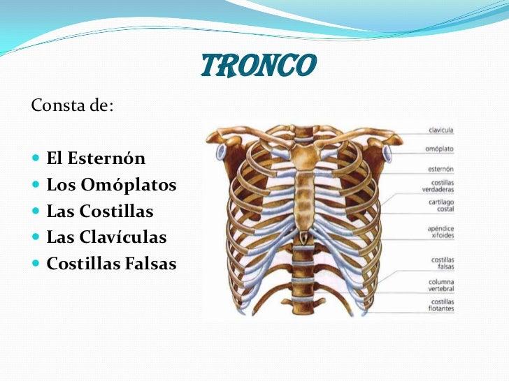 La Anatomía Humana (Пример) - MindMeister