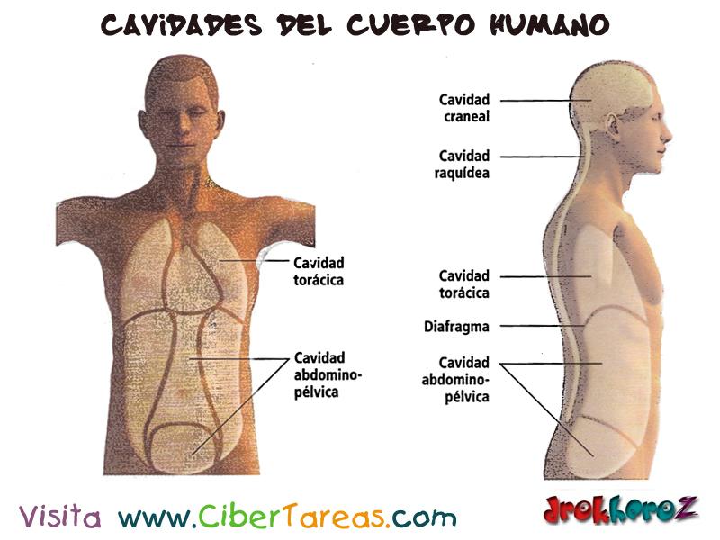 ASPECTOS ANATÓMICOS DEL CUERPO HUMANO (Exemplo) - MindMeister