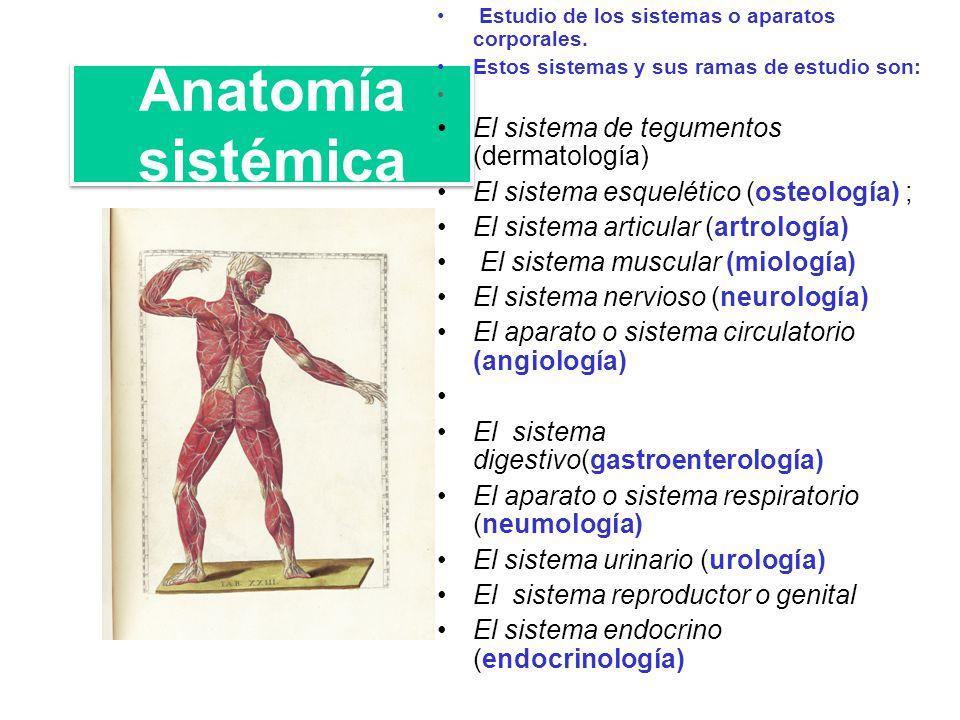 Anatomía Humana (Beispiel) - MindMeister