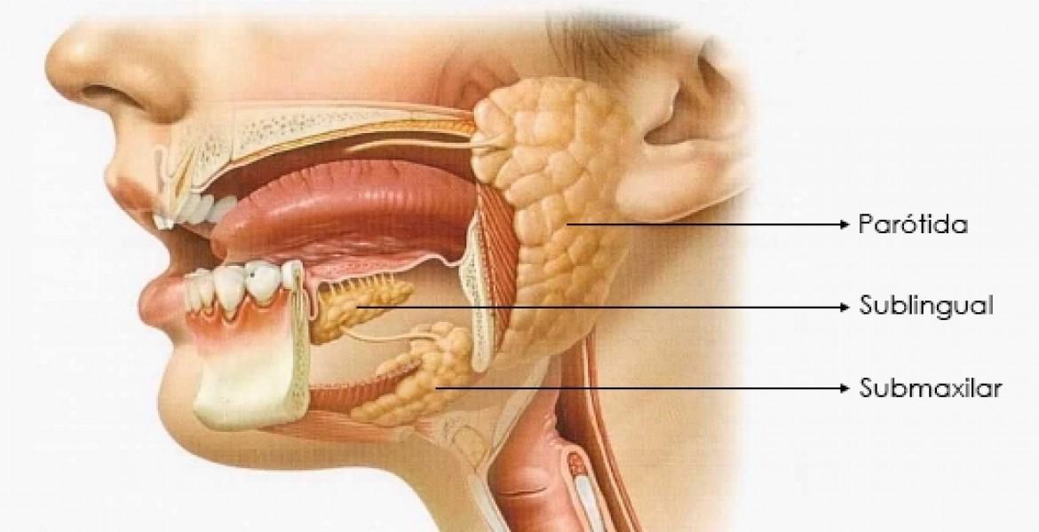 El Sistema Digestivo: El sistema digestivo o apar... (Ejemplo ...