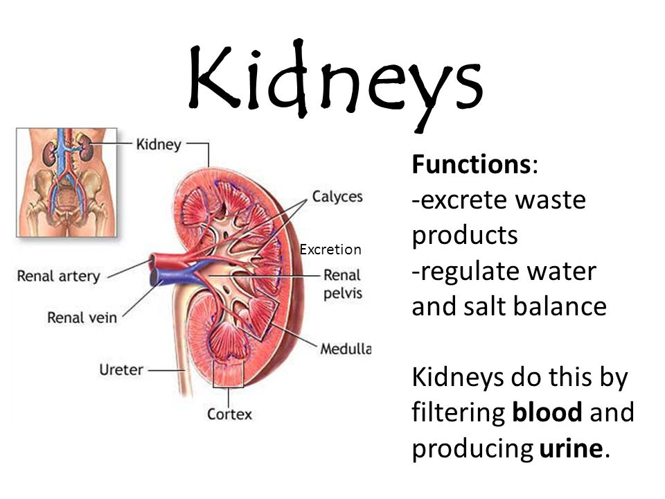 The kidney\'s role in homeostasis (Exemple) - MindMeister