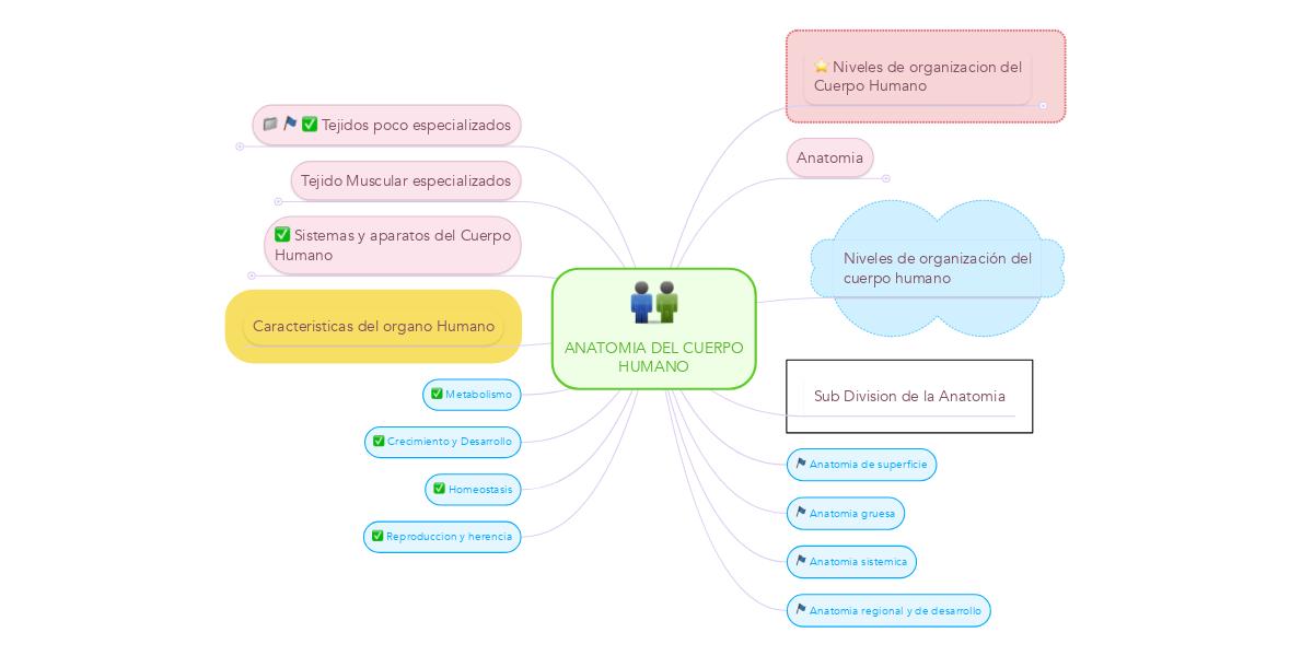 ANATOMIA DEL CUERPO HUMANO (Пример) - MindMeister