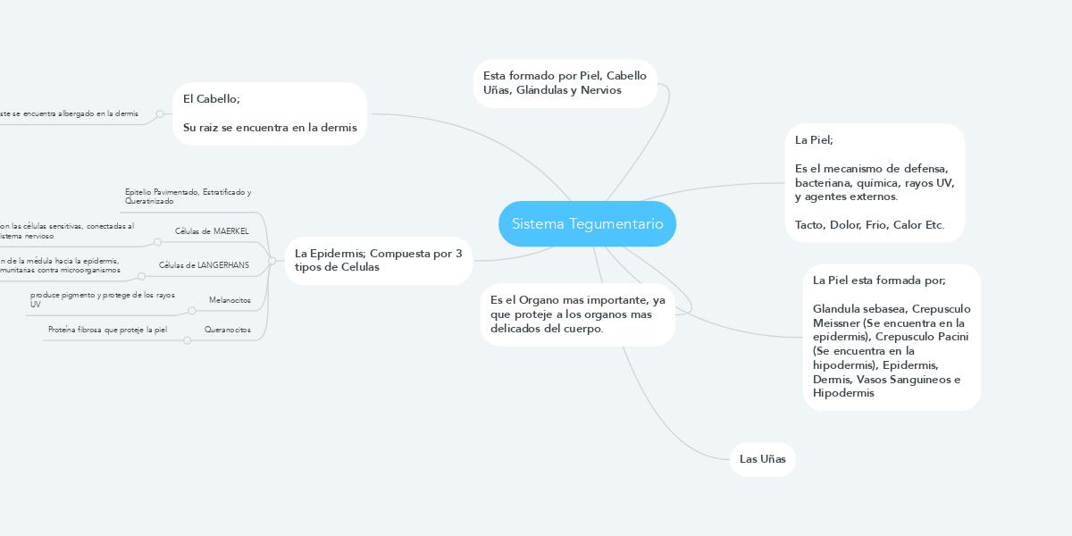 Sistema Tegumentario (Пример) - MindMeister